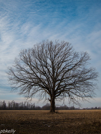 12-27.  This is Jeanne Williams favorite tree at Peak.