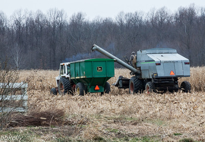 12-25. This is what went on most of Christmas Day next door to me.  The cornfield finally went down!