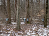 February 23.  Went to Carlyle Reservation today to walk and check out the Maple Sugaring.