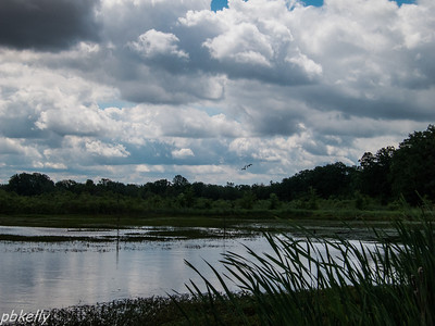 June 2.  Crook Street Wetlands.  Wild and rapidly changing skies.