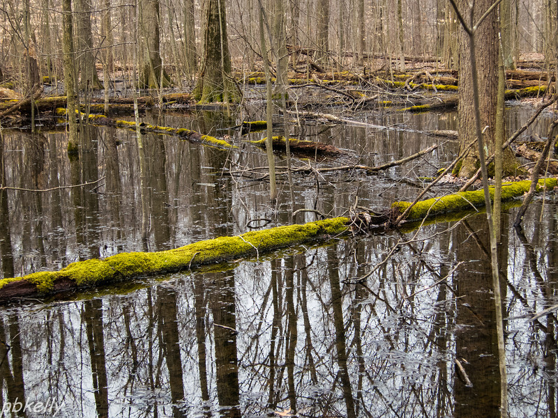 March 15.  Sandy Ridge.  No ice.  Just reflections and the green covered logs.