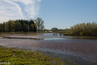 May 5.  My standard opening shot at the wetlands.  Beautiful Day!!!  Click for a larger size.