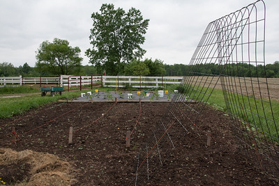 May 31.  An unattractive view of our newly planted vegetable garden.  It was so windy when we were putting in the plants, we put buckets of water on the weed proof fabric to keep it from blowing away.  Will update on the garden as it grows.  It will get nicer!