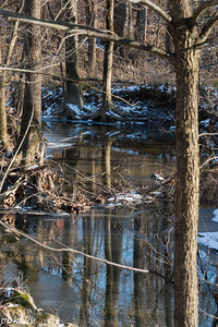 11-30.  Carlyle.  Reflections on the stream behind the Visitors Center.
