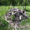 5/10/2013: Pile of branches and limbs that could be used for berm-building.