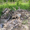 5/10/2013: Previously dumped tree limbs, trunks, and stumps that could be used for building or reinforcing a berm.