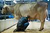 Fachmesse Tier & Technik auf dem Olmagelände in St. Gallen © Urs Bucher/IMAGOpress.com