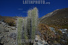 2013-01-19 VISTA GERAL DE TULAHUEN - VALE DO LIMARI - COMUNA DE MONTE PATRIA - COQUIMBO IV REGIAO CHILE . TULAHUEN E CONHECIDA PELA PRODUCAO DE PISCO DO DENOMINACA DE ORIGEM , ONDE E PRODUZIDO O PISCO WAQAR INTERNACIONALMENTE PREMIADO . EM TULAHUEN MOROU NOS ULTIMOS 30 ANOS DE VIDA O FOTOGRAFO CHILENO DA MAGNUM SERGIO LARRAIN , NO PROXIMO DIA 07.02.2013 FARA UM ANO DE SUA MORTE  / REGION DE Tulahuen , PRODUCCION DE PISCO , DONDE EL FOTOGRAFO Y MAGNUM Sergio Larraín PASO LOS ULTIMOS 30 ANOS DE SU VIDA / REGION OF TULAHUEN PRODUCTION OF PISCO AND WHERE THE PHOTOGRPHER MAGNUM SERGIO LARRAIN LIVED DURING HIS LAST 30 YEARS /REGION VON TULAHUEN WO PISCO PRODUZIERT WIRD UND DER FOTOGRAF MAGNUM SERGIO LARRAIN DIE LETZTEN 30 JAHRE SEINES LEBENS VERBRACHT HAT .  © Lucas LAcaz Ruiz /LATINPHOTO.org
