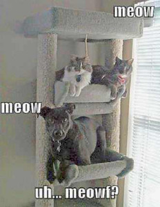 dog cat tower