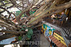 Costa Rica - Santa Elena : Tree House Restaurante and Cafe / Restaurante y cafeteria Tree House - restaurante con arbol en el interior / Restaurant Tree House in Santa Elena © LATINPHOTO.org