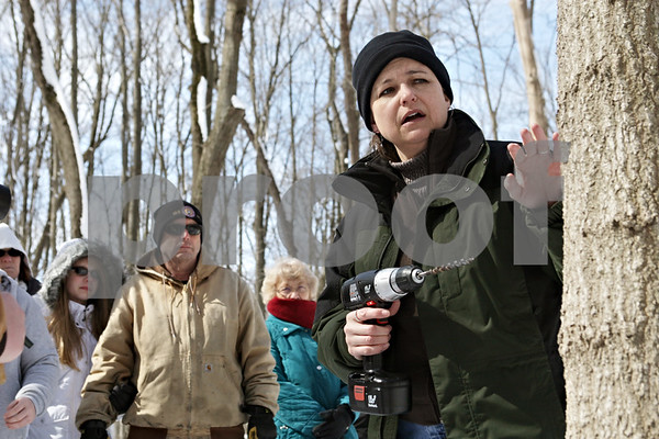 Rob Winner – rwinner@shawmedia.com<br /> <br /> Peggy Doty, an educator with the University of Illinois Extension, prepares to drill a shallow hole into a maple tree before collecting sap during Maple Syrup Fest in Genoa, Ill., Saturday, March 2, 2013.