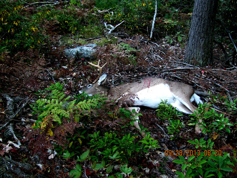 where he fell, only 27 yards away from where shot
