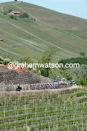 The peloton is still in pursuit of the escape as it enters the wine country of Piemonte...