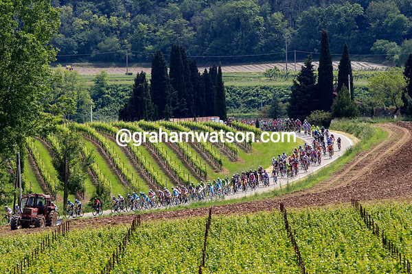 The peloton is chasing the escapers through the Veneto wine region...