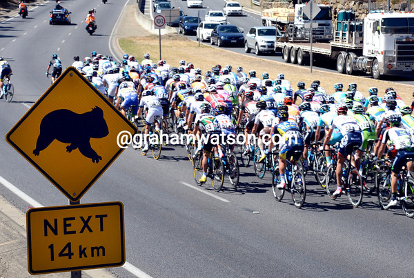 Wombats away - the peloton lets rip on the first climb of the day..!
