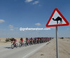 Is BMC is leading the chase...for camels..?