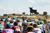 Toro, toro..! There's a big black bull watching the Vuelta's last hour...