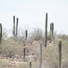 Saguaro National Park outside of Tucson - temperature 106 degrees.