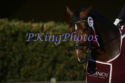 2014 Autumn Dressage Festival Bec