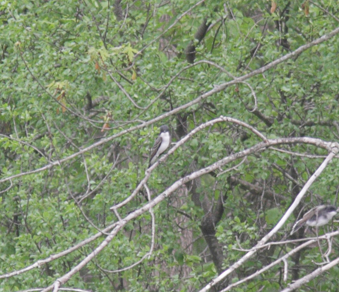 Bird on east side of Fox River.