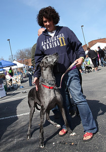 "Tammi White of Wadsworth and her 7-yr-old Great Dane ""Sophie"" at the Love-a-Stray Dog Walk. Sophie was a ""rescue"" dog from the Cincinnati area. photo by Ray Riedel"