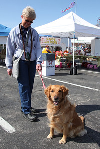 "Maureen Heuler of Avon Lake and her lovable 2.5 yr old Golden Retriever ""Kayla"" at the Love-a-Stray Dog Walk. Kayla is high energy, but obeys commands well. Maureen is training her to one day work as a therapy dog for people at Arden Courts. photo by Ray Riedel"