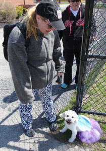 Jen West and her 13-yr-old Bichon at the Love-a-Stray Dog Walk in Avon Lake. photo by Ray Riedel