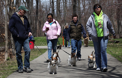 "Robert Andrews (left) walks 14-yr-old ""Maurice"", followed by (left to right) Karen and Ryan McCoy walking siblings ""Tank"" and ""Maddie"", and Lina Paesani an ""I love a stray"" volunteer, walking her dog at the Love-a-Stray Dog Walk in Avon Lake. photo by Ray Riedel"