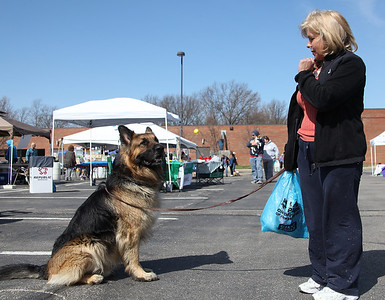 "Samson, a 3-yr-old 110 lb long coated German Shepherd, is not distracted by people and other dogs when owner Kim McElheny has him ""stay"" at the Love-a-Stray Dog Walk in Avon lake. photo by Ray Riedel"