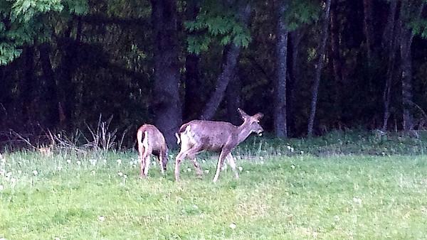 2014 May Bremerton Elks