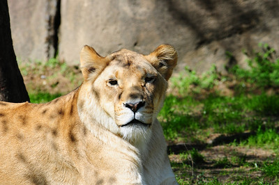 2014_Memphis_TN_Zoo  0006