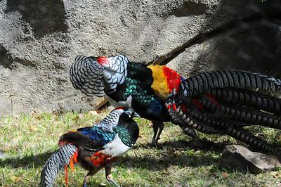 2014_Memphis_TN_Zoo  0018