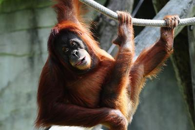 2014_Memphis_TN_Zoo  0028