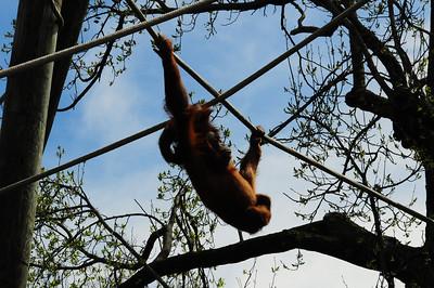 2014_Memphis_TN_Zoo  0025