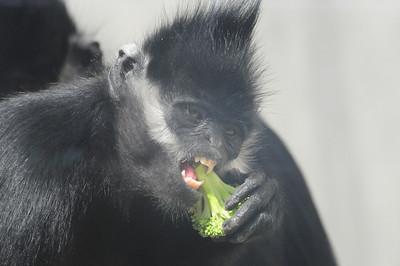 2014_Memphis_TN_Zoo  0020