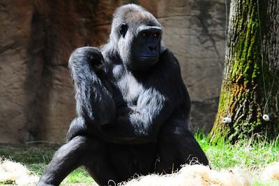 2014_Memphis_TN_Zoo  0024