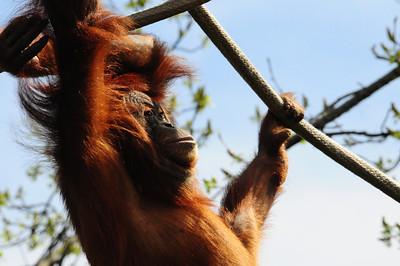 2014_Memphis_TN_Zoo  0026