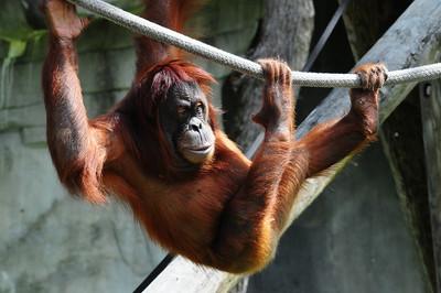 2014_Memphis_TN_Zoo  0027