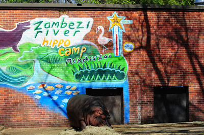 2014_Memphis_TN_Zoo  0007