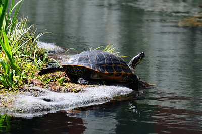 2014_Memphis_TN_Zoo  0010