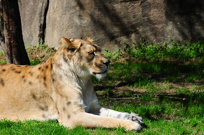 2014_Memphis_TN_Zoo  0005