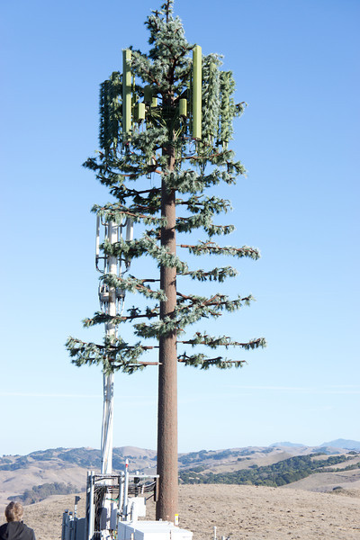 Telephone poll constructed to look like a tree. El Sobrante Ridge Trail.