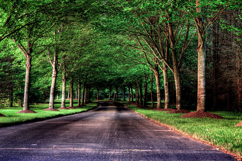 tree_farm_rd2 tif