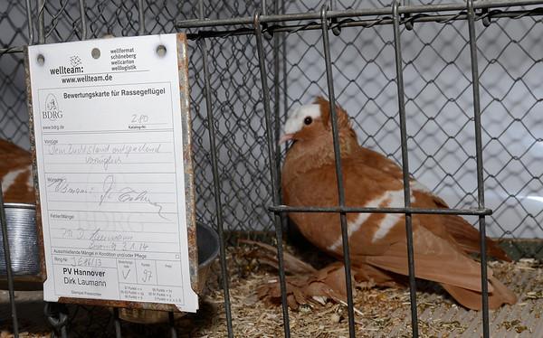 2014 Zwonitz Color Pigeon Show