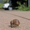 Snail on Claremont Avenue sidewalk.