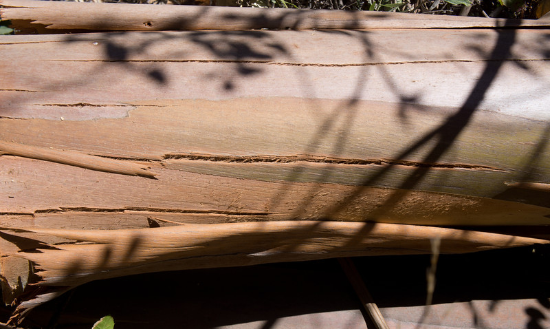 log, Sibley Park