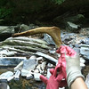 6/6/14: Jessica Cox finds a deer jaw bone in Sawmill Creek!
