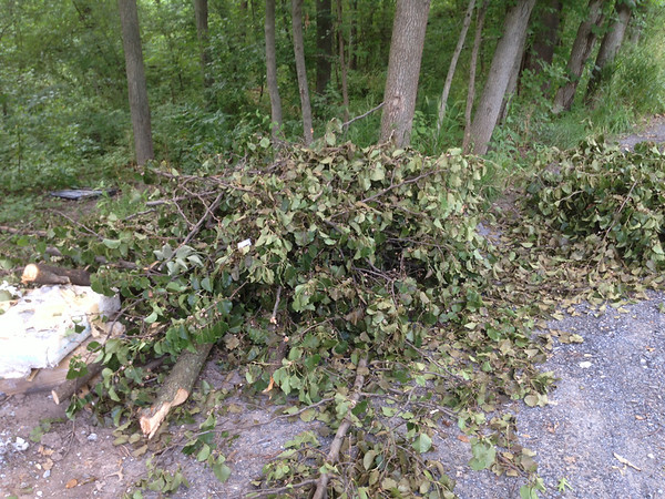 6/30/14: Part of Jon Merryman's cleanup on Race Road, south of the Piney Run bridge, A.A. County, Deep Run subwatershed. Found piles of yard wastes.