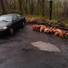 4/29/14: Jon Merryman's cleanup on Hilltop Road located at the hairpin turn in Baltimore County, Patapsco River watershed. Found 8 heavy bags of yard waste. Estimated weight is 320 lbs.