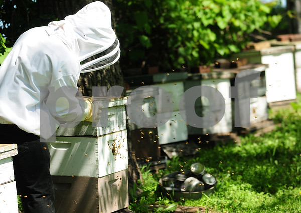 dnews_0610_Bees2